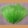 Ostrich feather, green