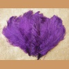 Ostrich feather,purple