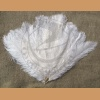 Ostrich feather, white