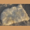 Sheep fur, white